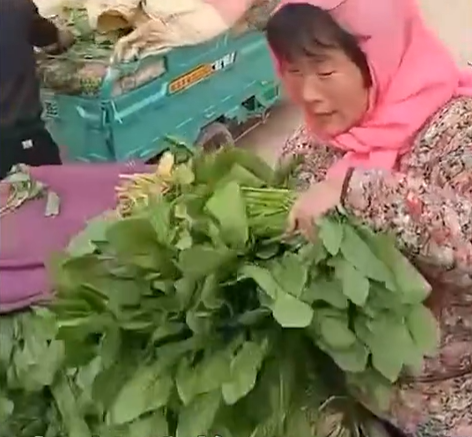 农民夫妻1300斤菠菜卖了15元 背后的真相原来是这样的