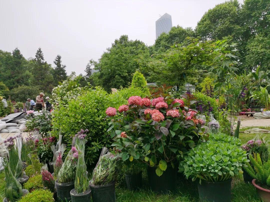 第二届武汉家庭园艺展抢鲜看 4月30日至5月7日举行