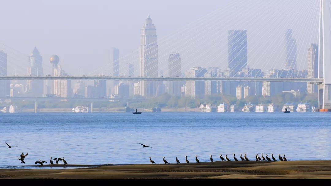 湿地花城将成为武汉新名片 让武汉市民轻松乐享花漾生活插图(3)