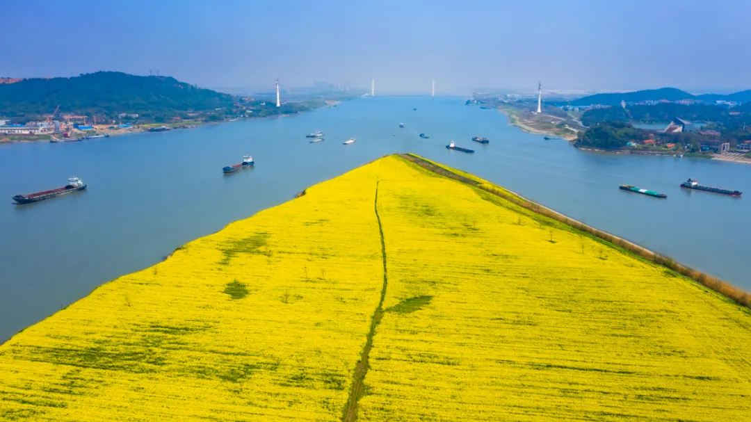 湿地花城将成为武汉新名片 让武汉市民轻松乐享花漾生活插图(2)